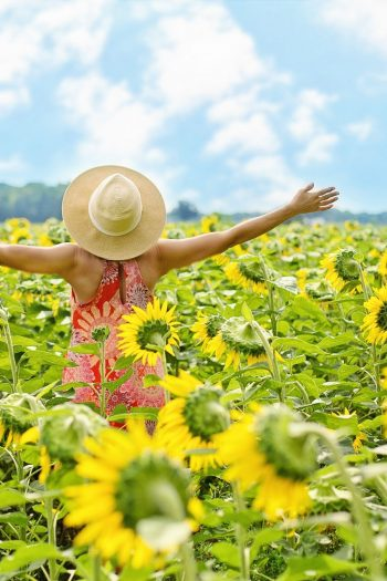 sunflowers woman sky